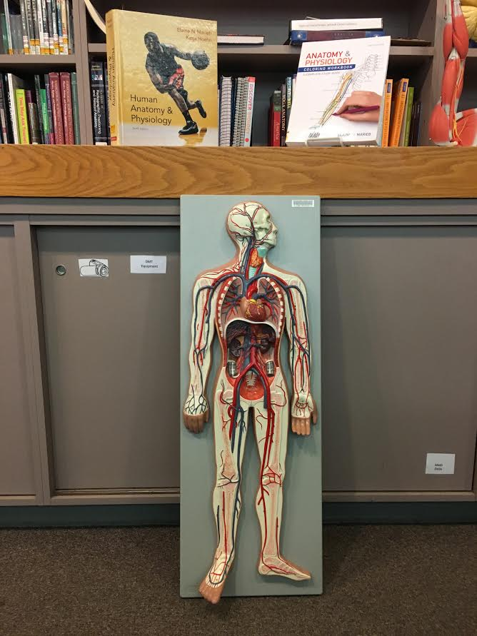A & P Sources - Anatomy & Physiology - Evans Library at Fulton ...