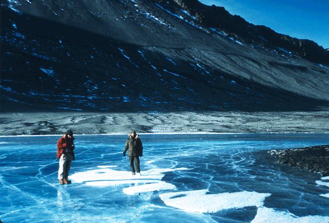 Shurley Antartica Collection