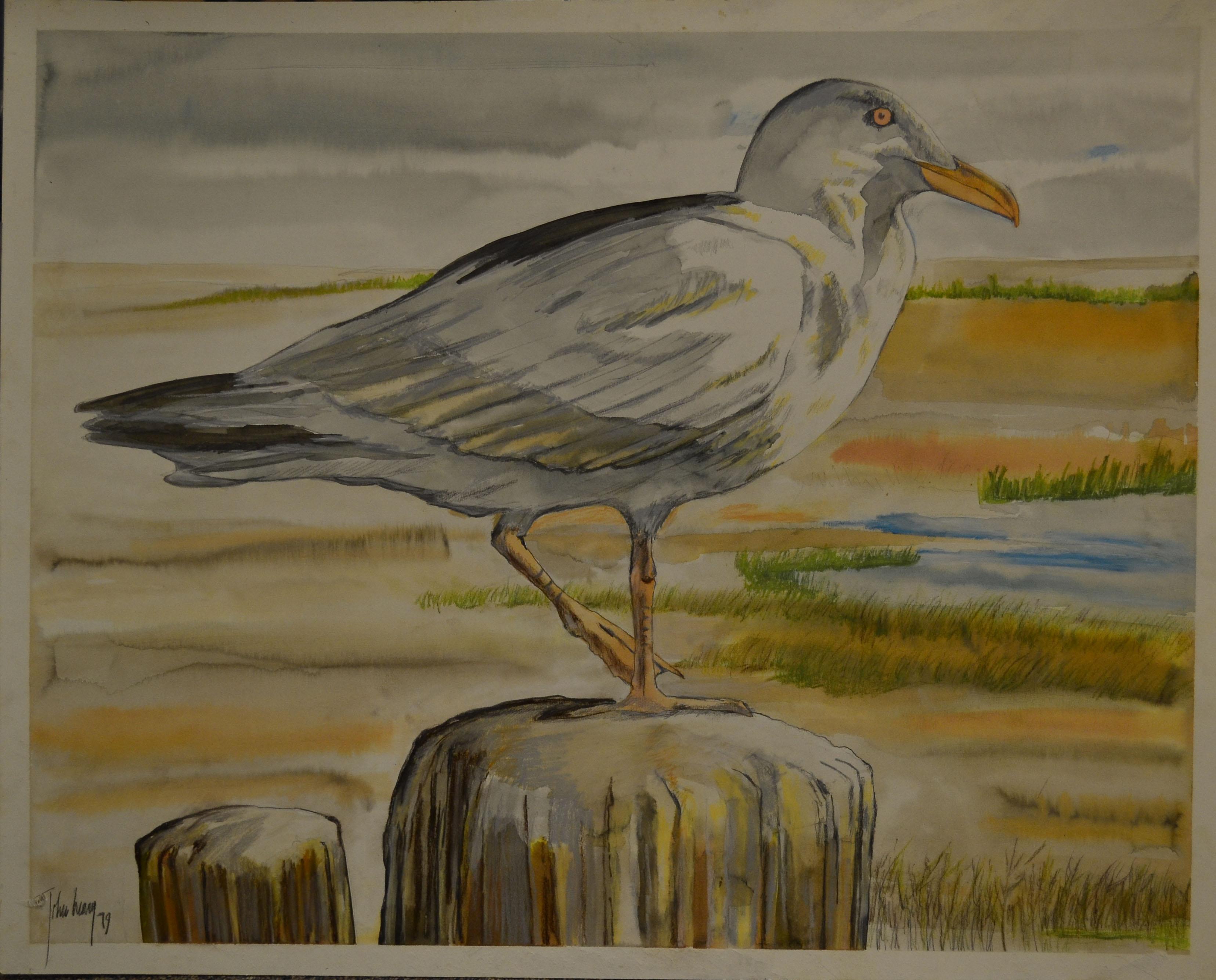 John Henry, Herring Gull