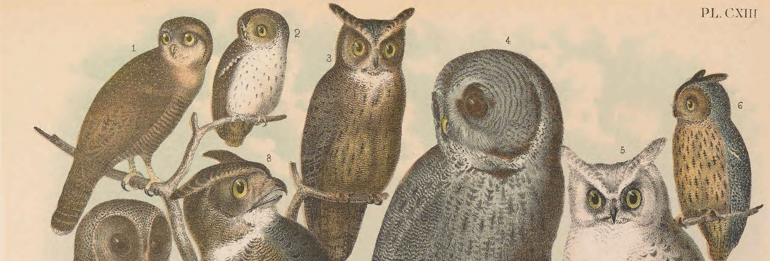 Detail from Birds of North America, 1903 - Biodiversity Hertiage Library Flickr Collection