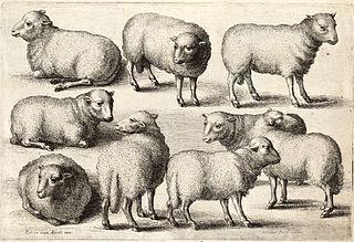 320px-Wenceslas_Hollar_-_Nine_sheep