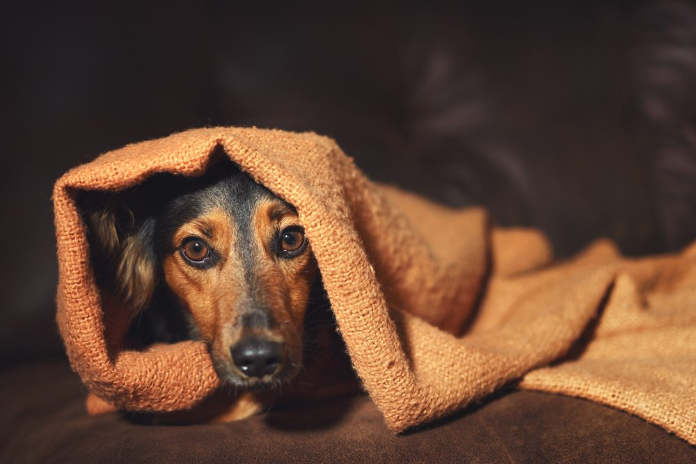 Is CBD Oil Safe For Dogs? #3 | Life360 Tips