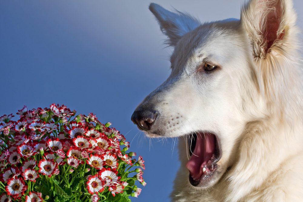 6. Improves Sleep | Is CBD Oil Safe For Dogs? | Life360 Tips