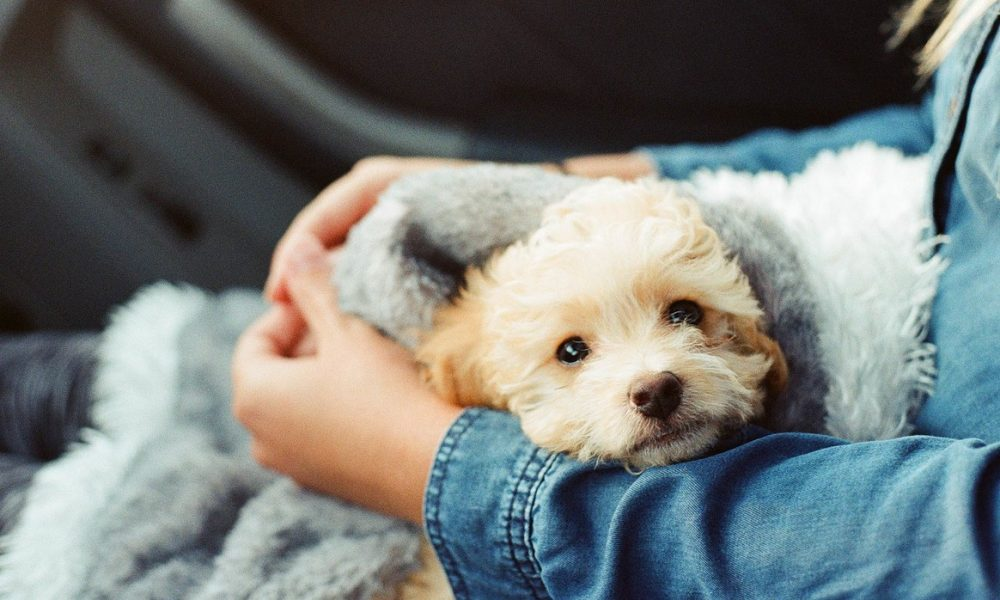 2. Keep Your Schedule The Same | 8 Tips To Help Your New Puppy Adjust | Life360 Tips
