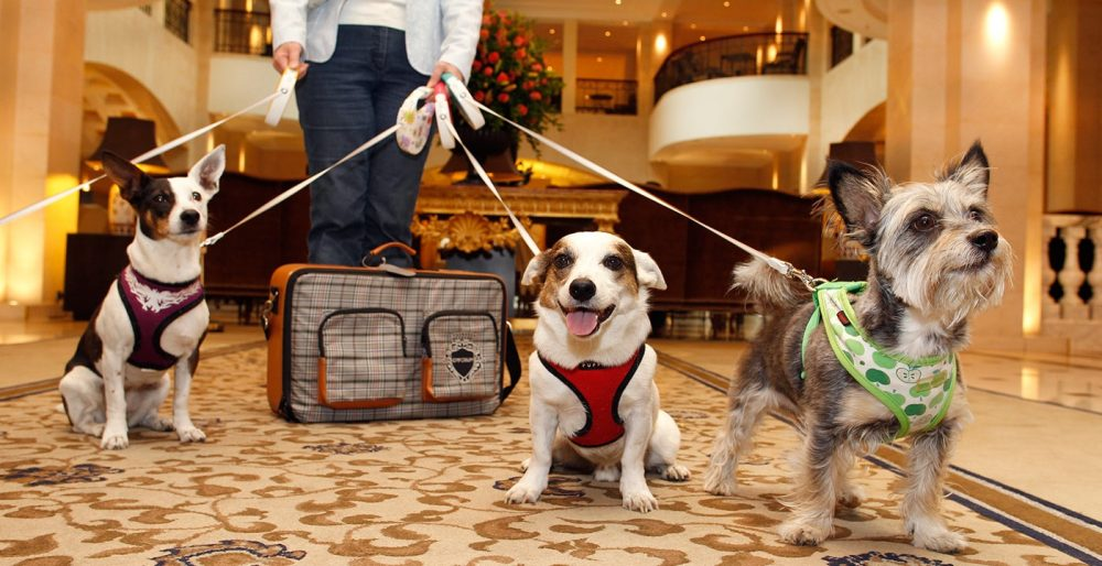 Top Pet-Friendly Hotels In The United StatesEconomy HotelsMid-Range HotelsLuxury Hotels