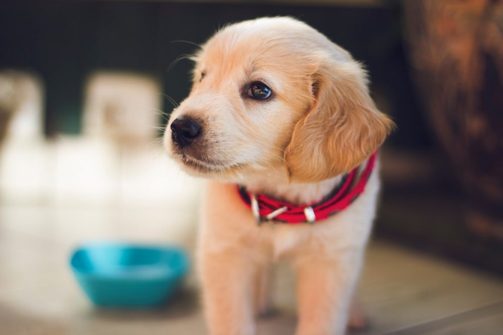 1. Watch What They Eat | 8 Tips To Help Your New Puppy Adjust | Life360 Tips