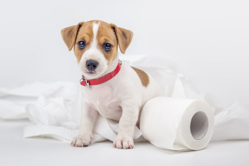 7. Start House Training | 8 Tips To Help Your New Puppy Adjust | Life360 Tips