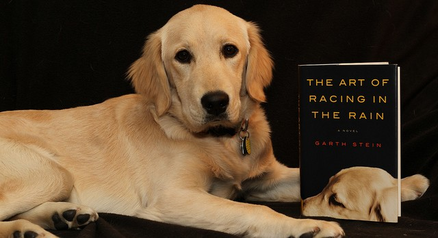 The Art of Racing in the Rain by Garth Stein | 9 Great Summer Reads For Animal Lovers | Life360 Tips