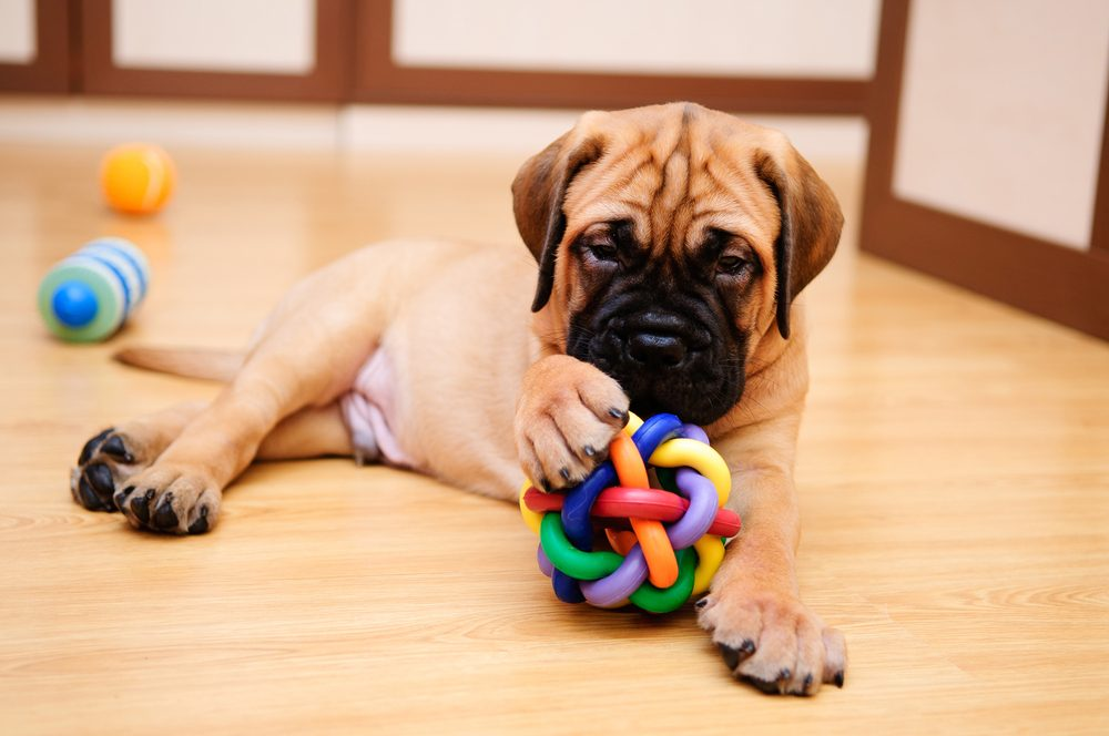 He Doesn't Listen | 8 Signs Your Pet Is Spoiled | Life360 Tips