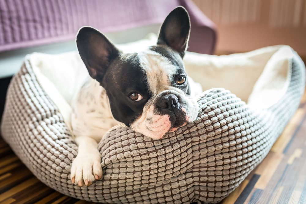 He's Obese | 8 Signs Your Pet Is Spoiled | Life360 Tips