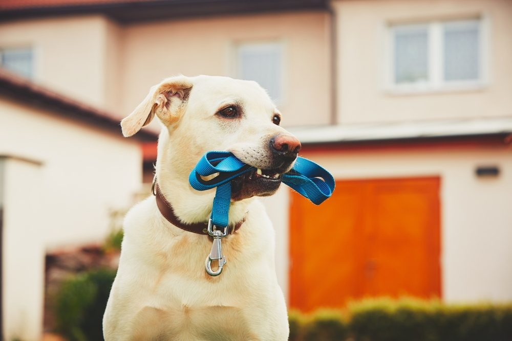 He's Got His Spot — And He's Not Moving | 8 Signs Your Pet Is Spoiled | Life360 Tips