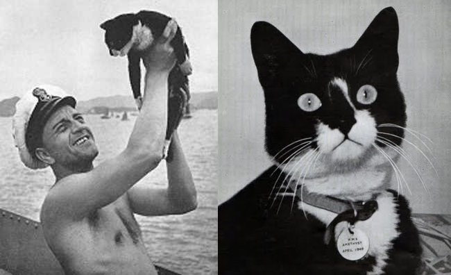 Sam, the cat who sank the Bismarck | Life 360 Tips
