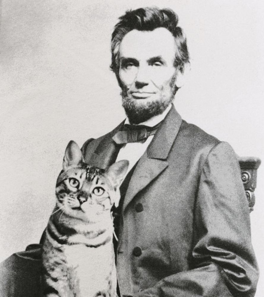 Tabby and Dixie, the cats who ruled the White House | Life 360 Tips