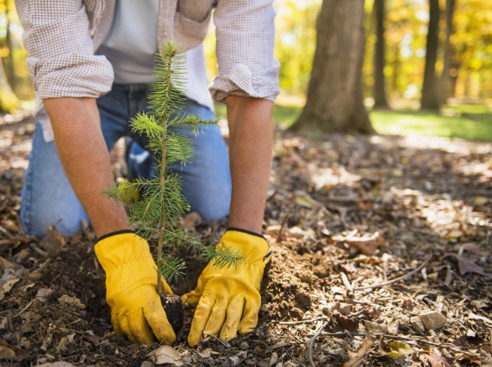 Arbor Day | Life 360 Tips