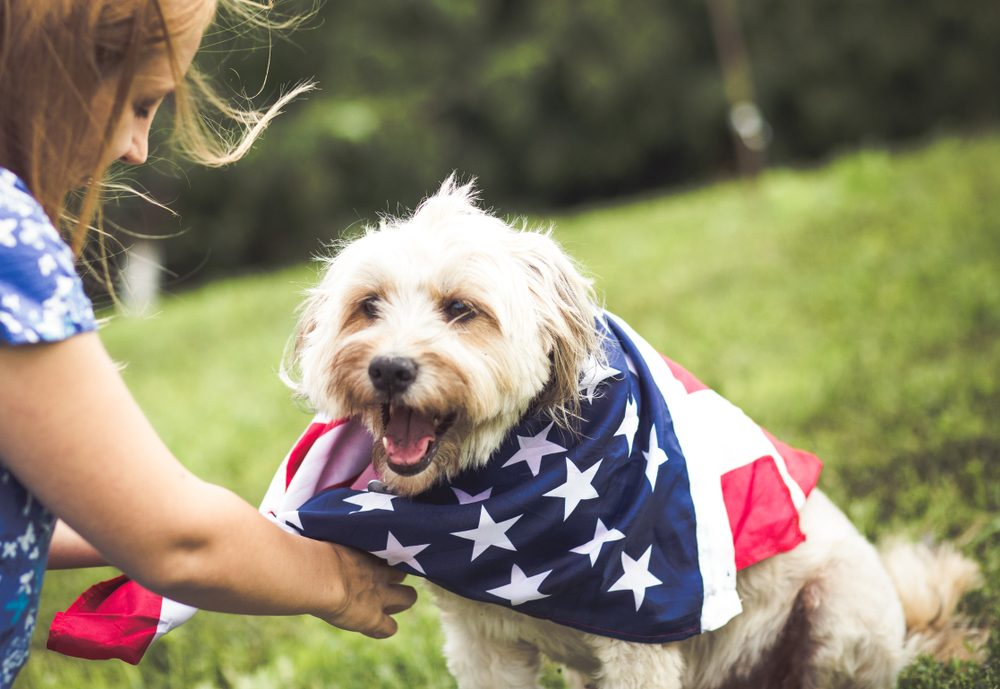 Do not set off fireworks around your pet | Life360 Tips
