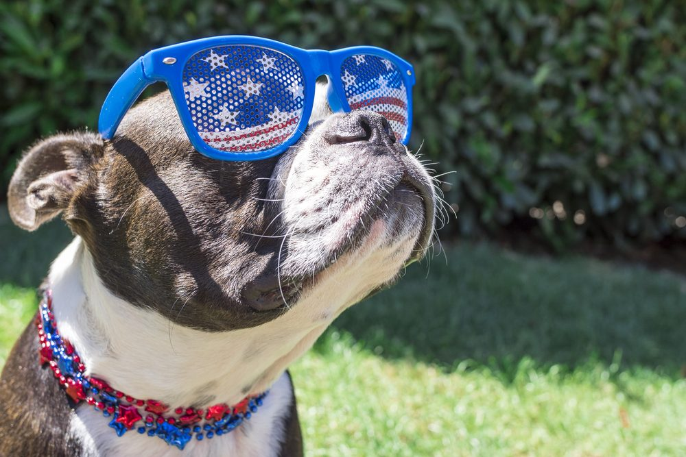 Do not take pets with you to the fireworks show | Life360 Tips