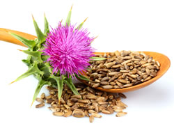 Milk Thistle and Seeds
