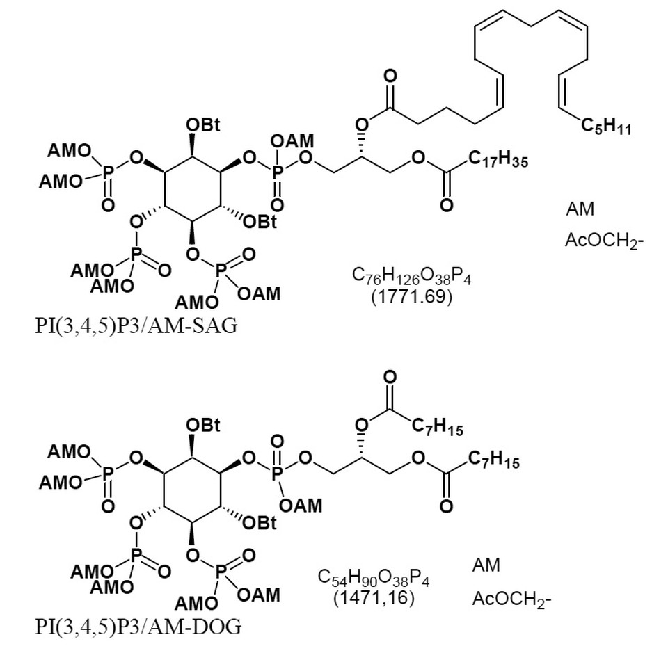 application of membrane am to cells