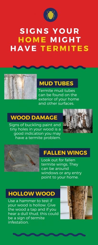 Red and green colored educational pamphlet on telling signs that your home might have termites