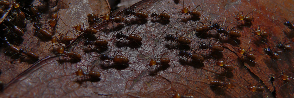 A close up image of a colony of termites on a leaf