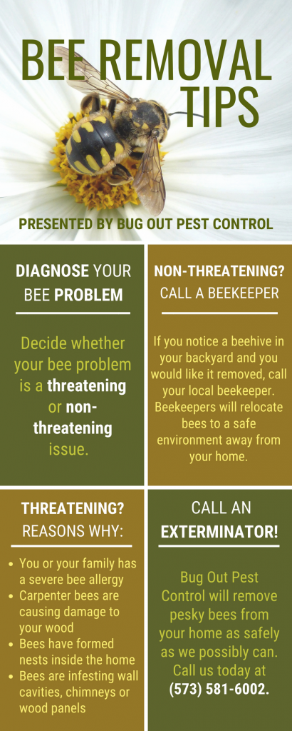 Bee Removal Tips by Bug Out Pest Control