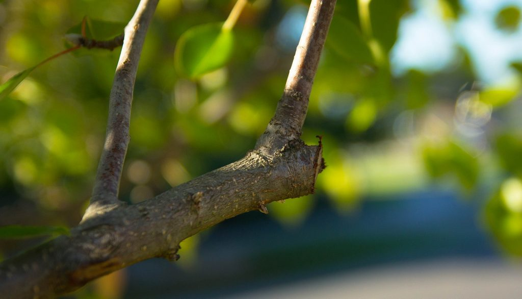 Zoomed in trimmed tree branch