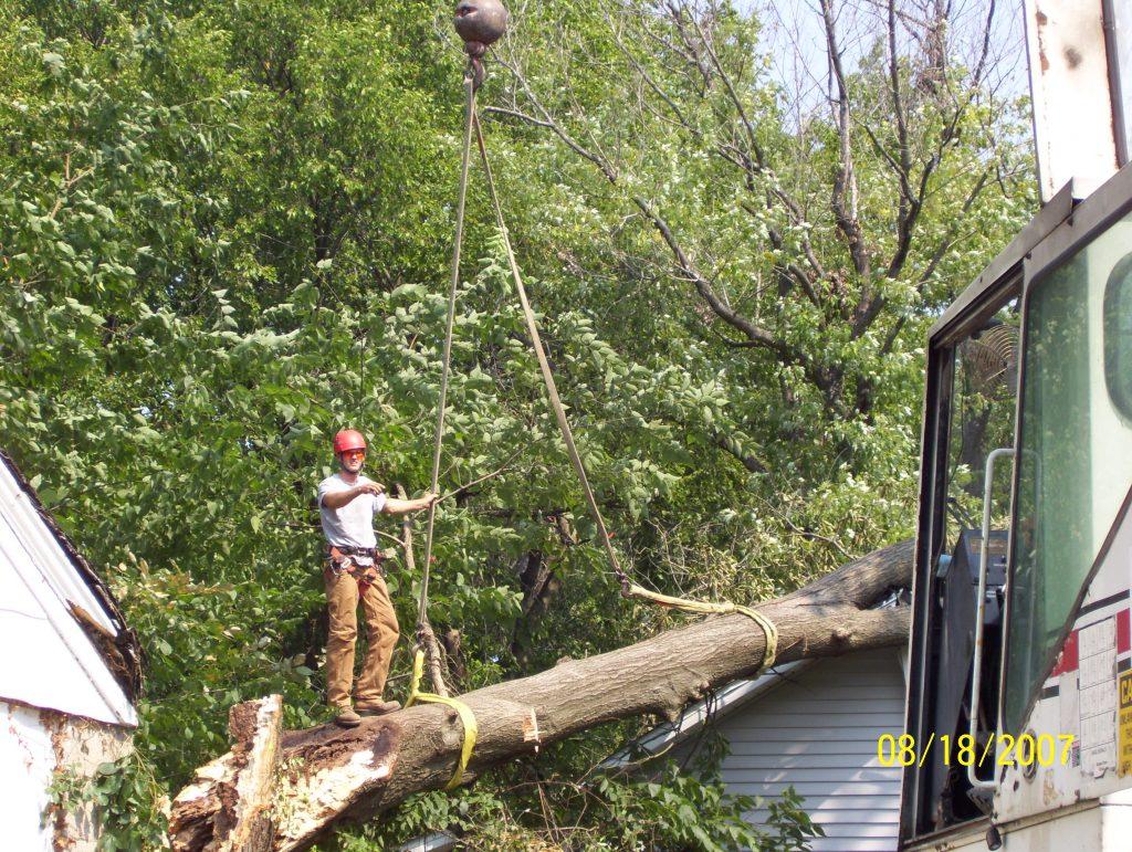 bringing down large tree limb