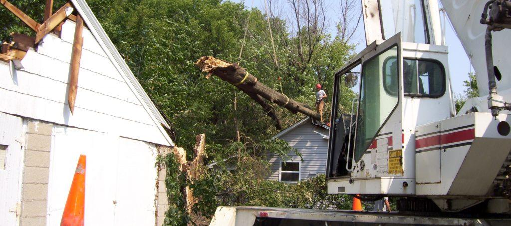 bringing down large tree