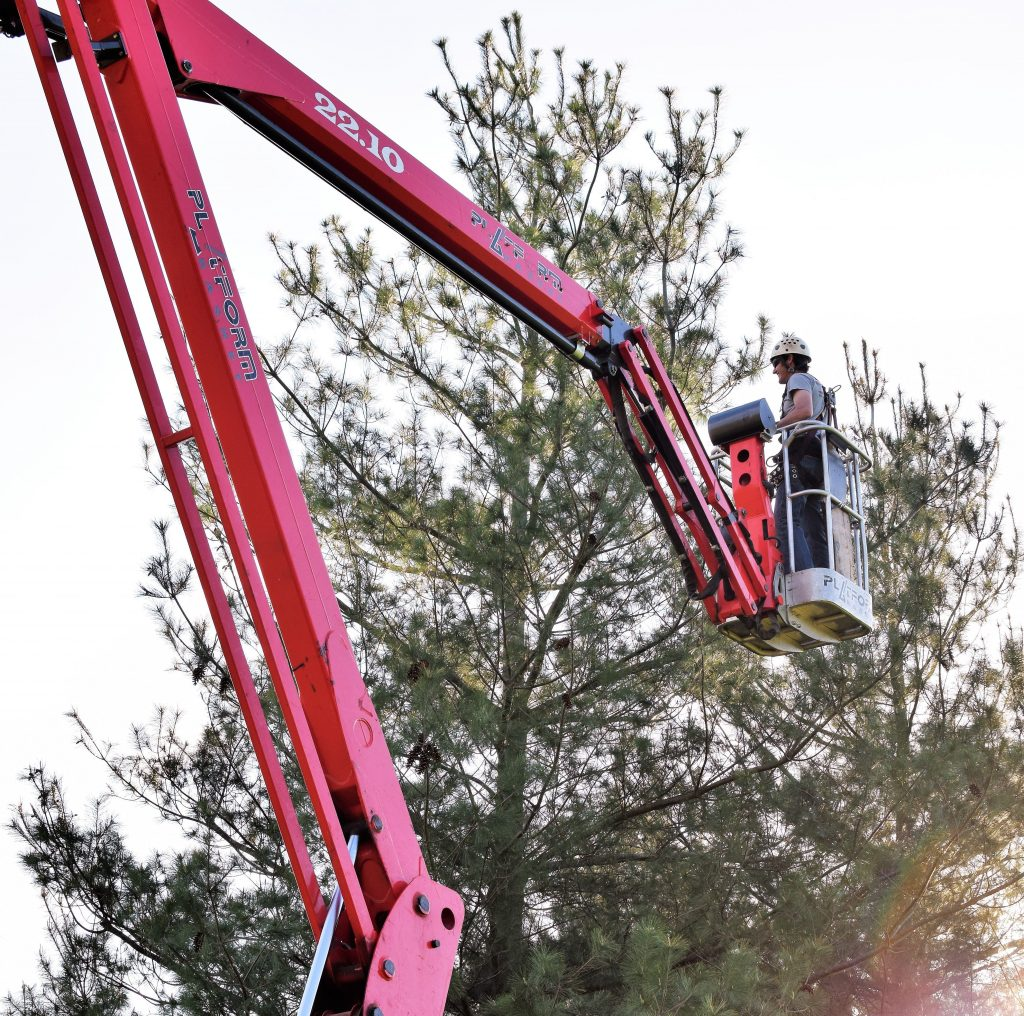 man in cherry picker trimming evergreen