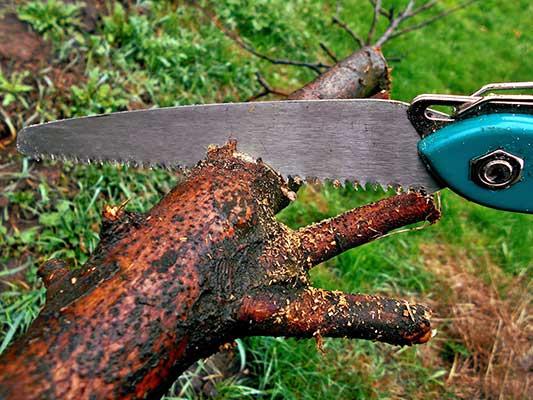 saw cutting timber