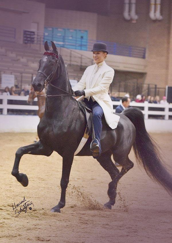 sammi-horse-gradient