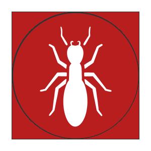 termite-still