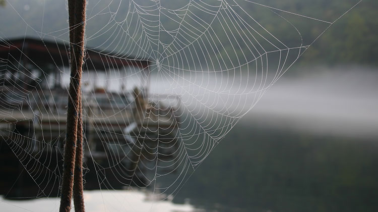 spiders-on-dock