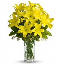 Vases & Plants