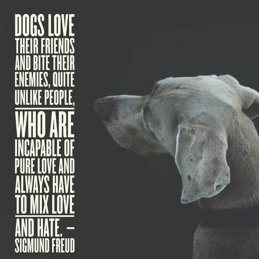 Sigmund Freud Dogs Love Their Friends
