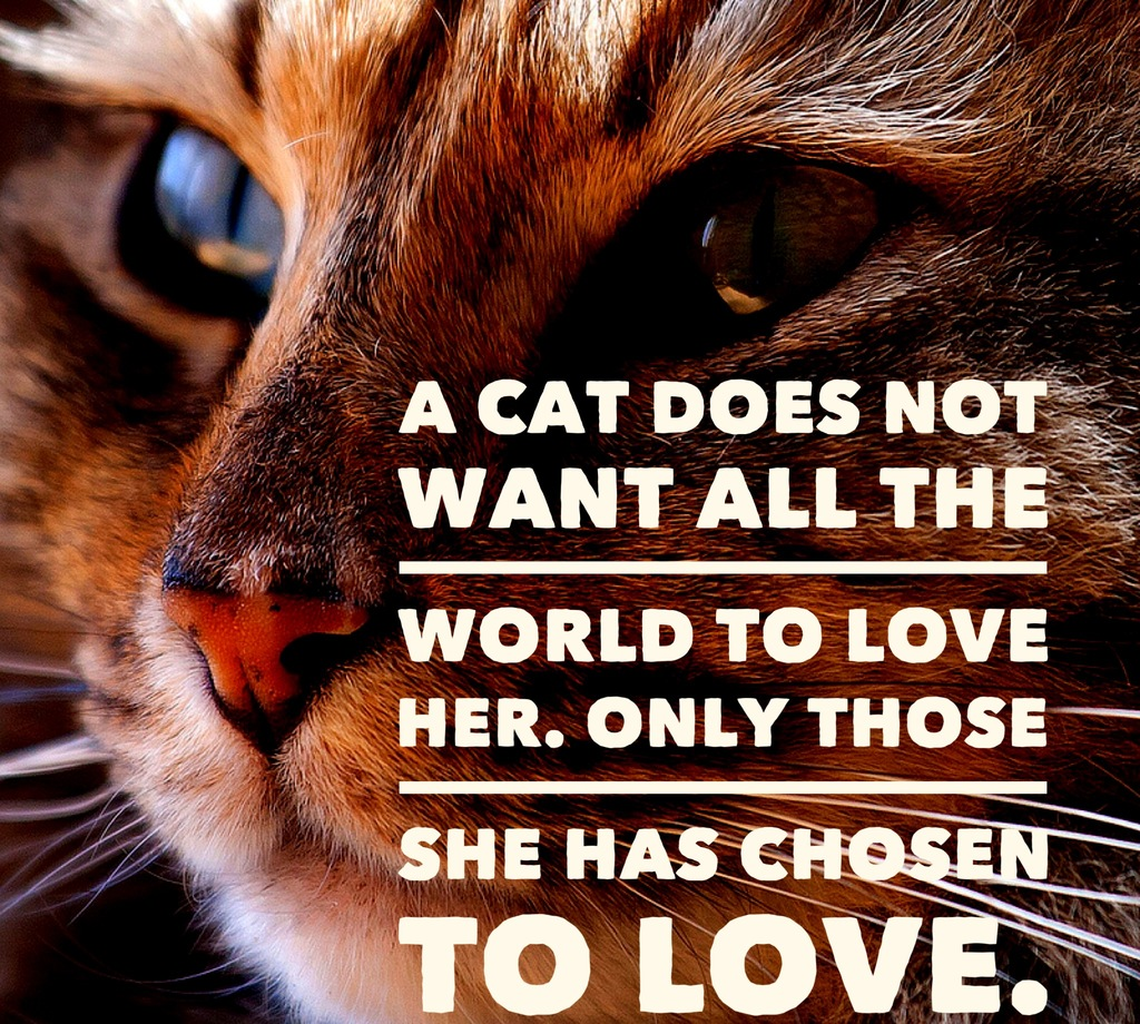 Quotes About Cats | Cat Quotes 25 Sayings Only Cat Lovers Will Understand