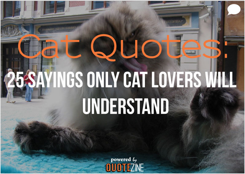 Quotes About Loving Dogs And Cats