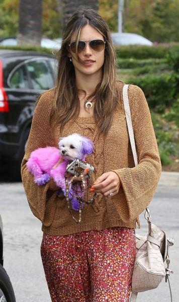 06612-animais-fashion-choupette-cachorro-rosa-alessandra-ambrosio-1