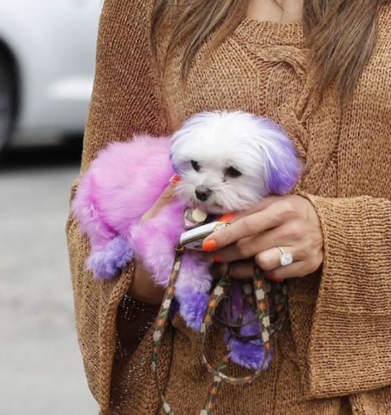 06712-animais-fashion-choupette-cachorro-rosa-alessandra-ambrosio-6