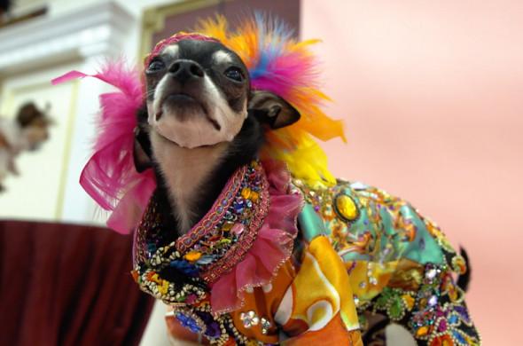 310818-cachorro-fashion-01
