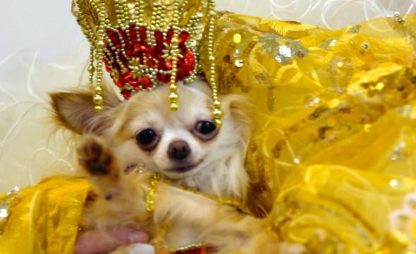 310818-cachorro-fashion-05