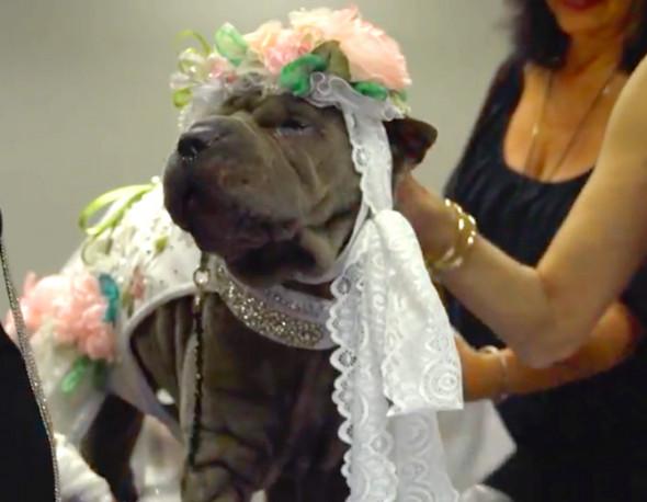 310818-cachorros-fashion-06