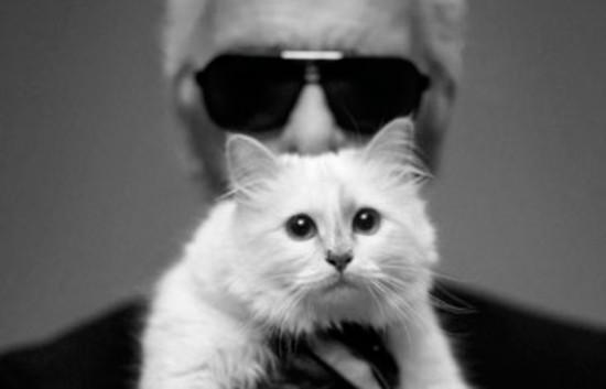 Será que no mundo da moda os pets também fashionistas? Essa aí é a Choupette de Karl Lagerfeld! Vem ver mais!