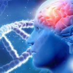 Curiosidades de la Genética Humana - Listas Locales