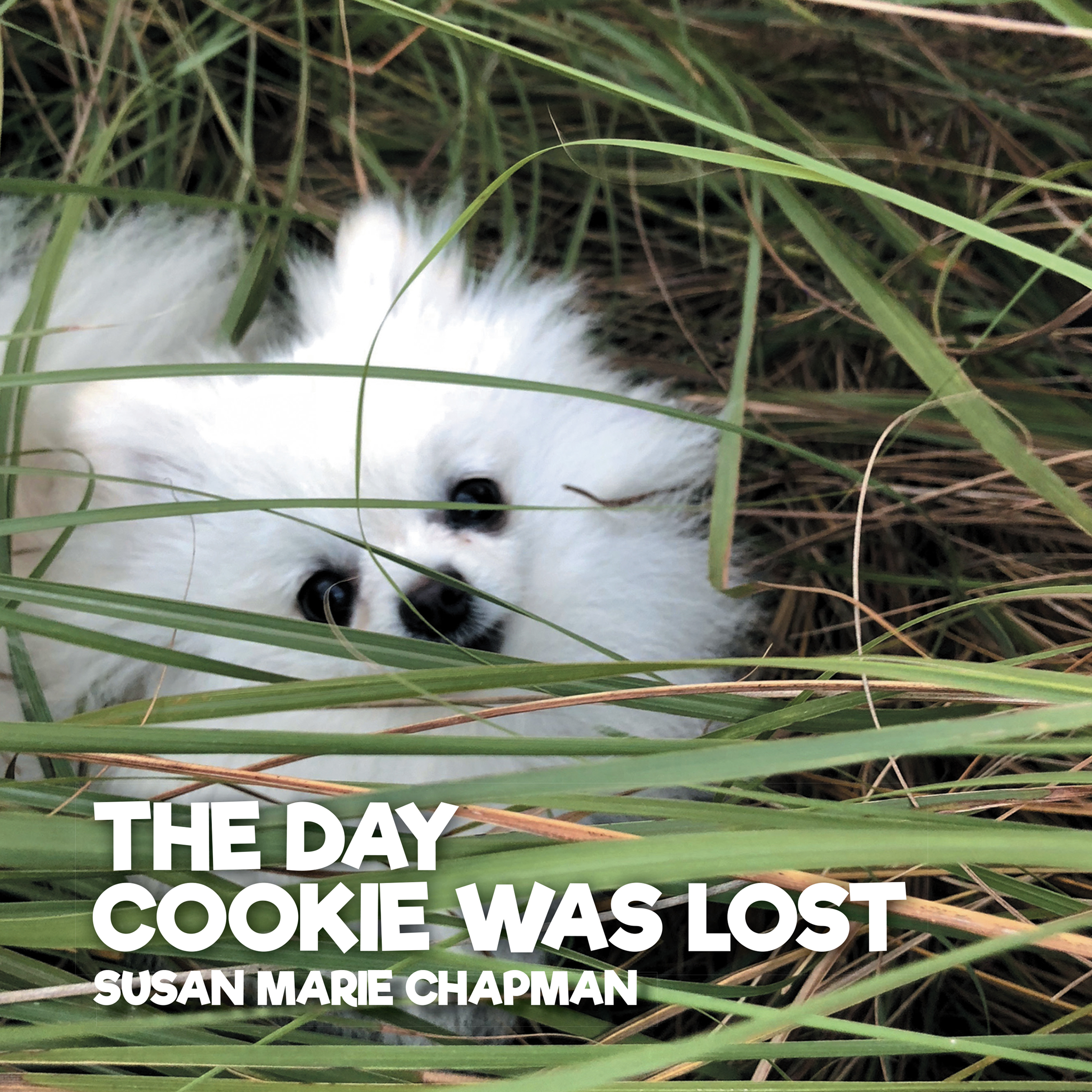 The Day Cookie Was Lost cover image