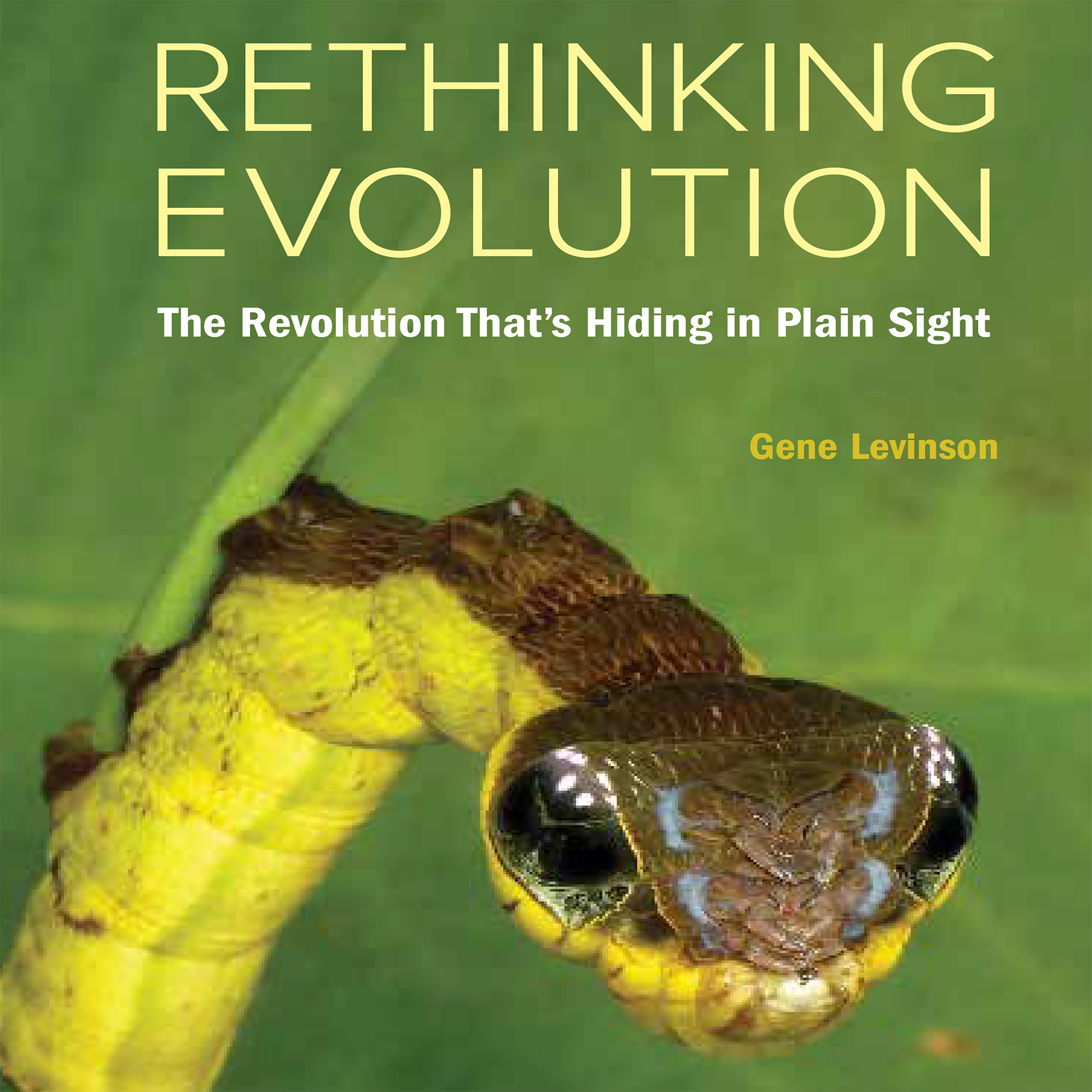 Rethinking Evolution cover image