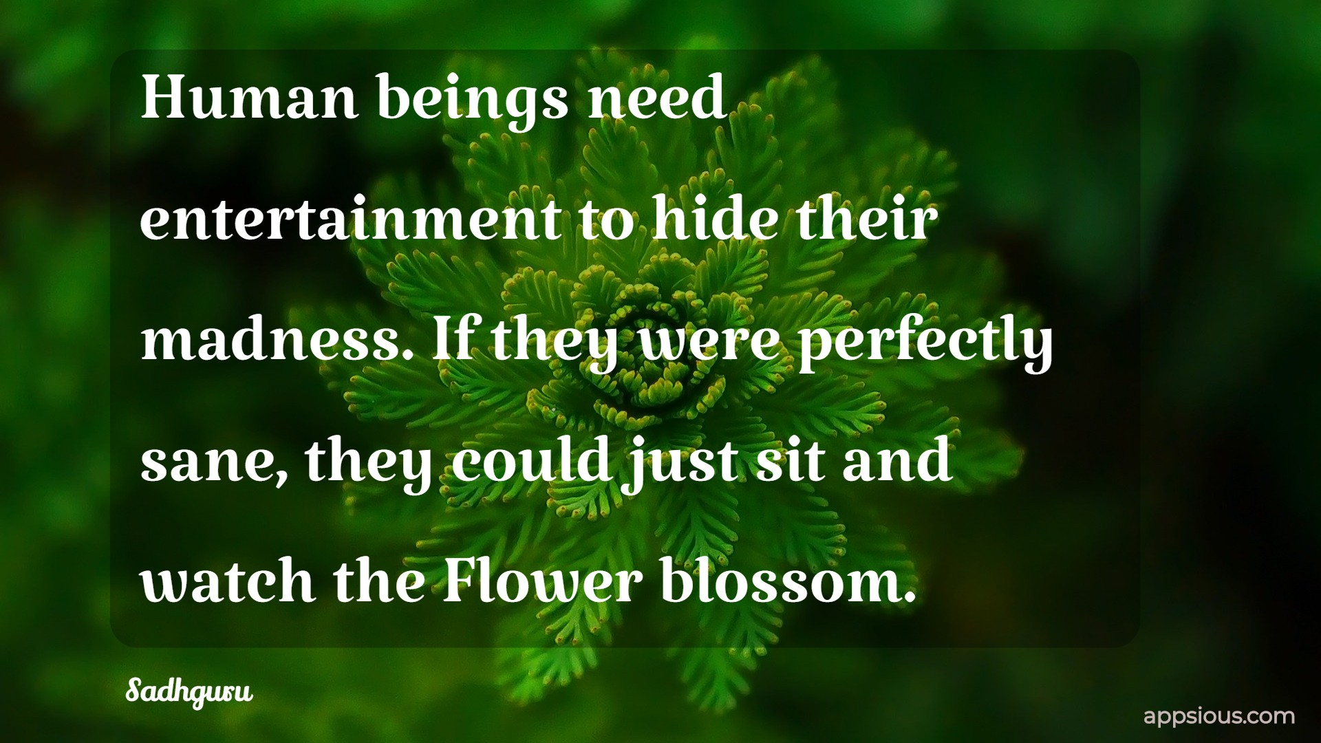 Human beings need entertainment to hide their madness. If they were perfectly sane, they could just sit and watch the Flower blossom.