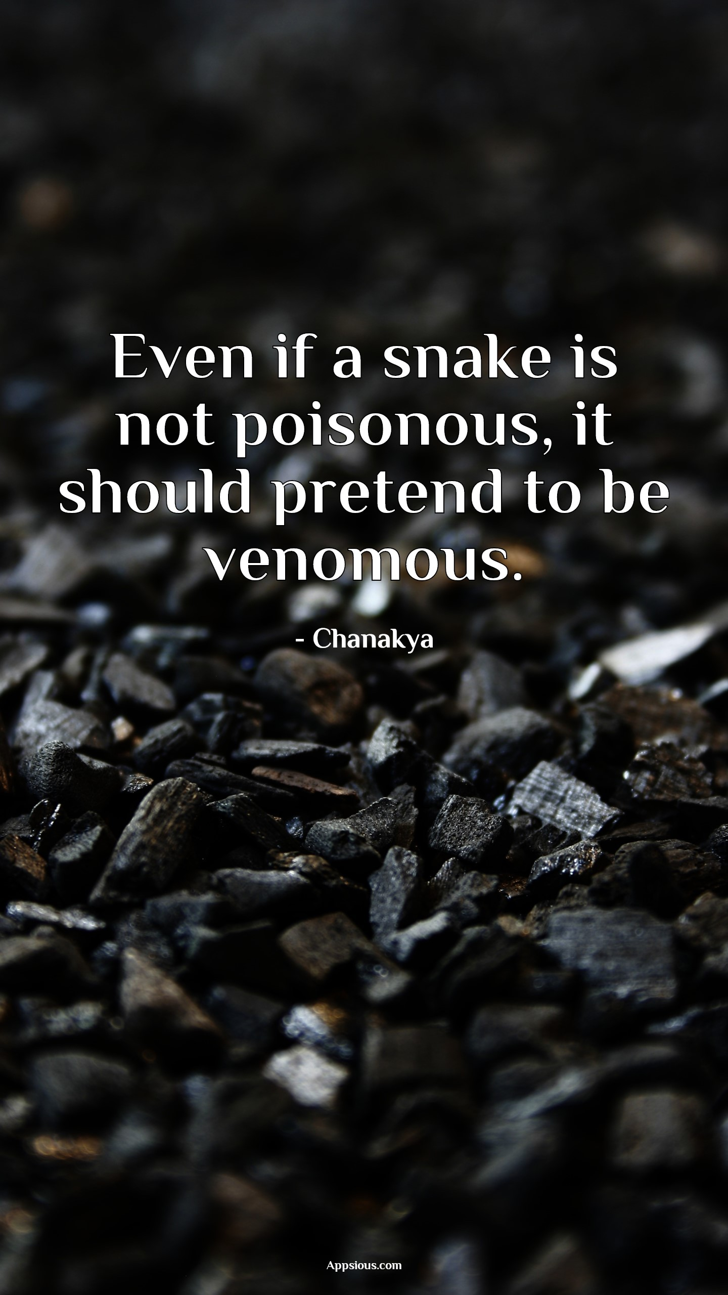 Even if a snake is not poisonous, it should pretend to be venomous.