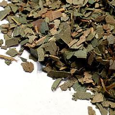 Eucalyptus leaf cs 5