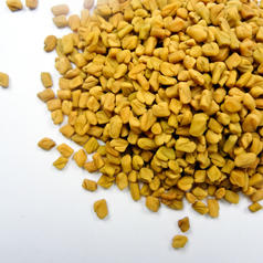 Fenugreek2